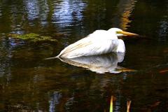 egret10
